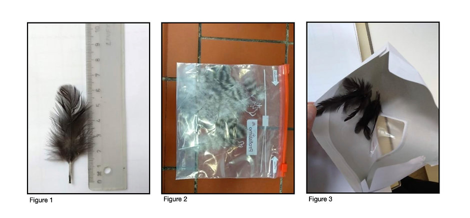 Feather Sample Directions