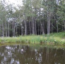 RFR Pond and woods.jpg