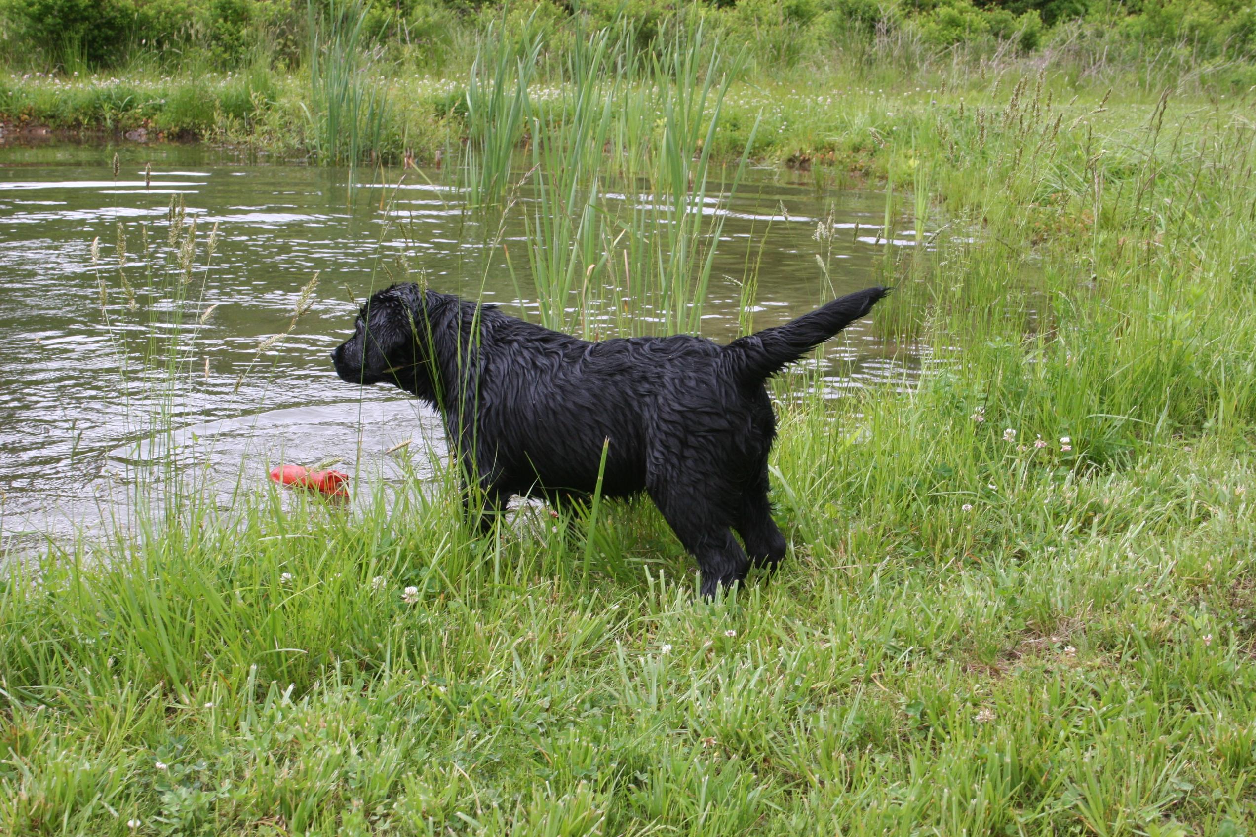 Hunt Training May 21 2012 035