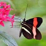 butterfly-4029493_1920.jpg