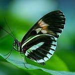 butterfly-44882_1920.jpg