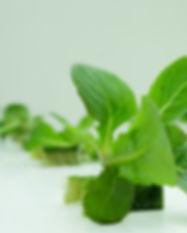 Lettuce Fixed 2.jpg