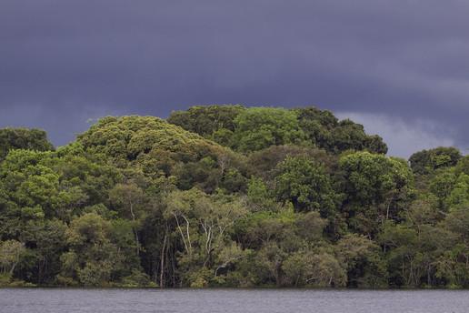 Amazônia_FlorestaAlagada.jpg