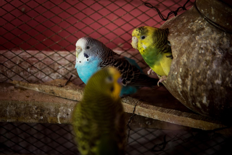 Birds in the kitchen
