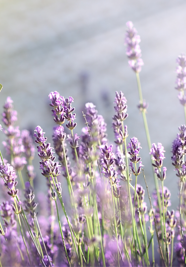 Lavender lane counselling hertfordshire, help self harm, suicidal thoughts, relationship, identity, anxiety, worry stress