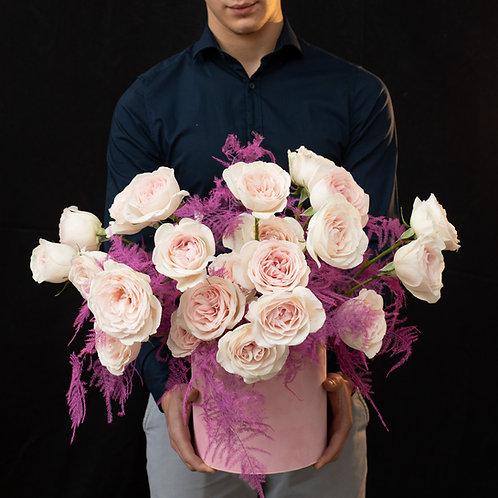Cutie trandafiri - Prince Jardinier