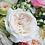 Thumbnail: David Austin Wedding Rose Purity™