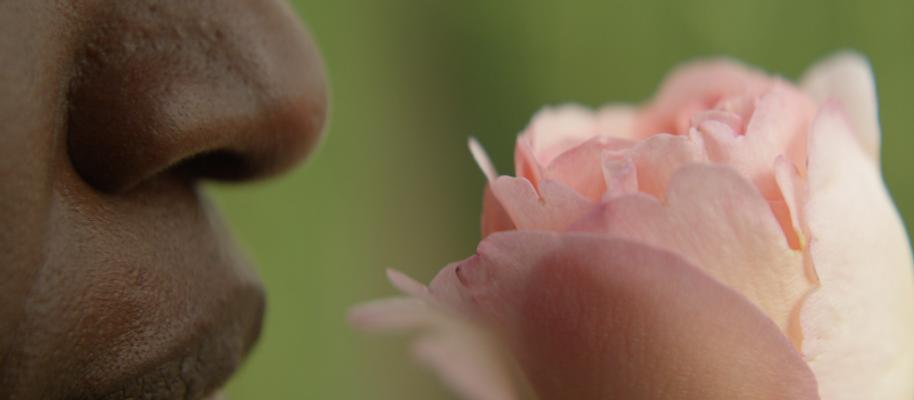 winifred-smelling-rose-close-2500-ogfq7c