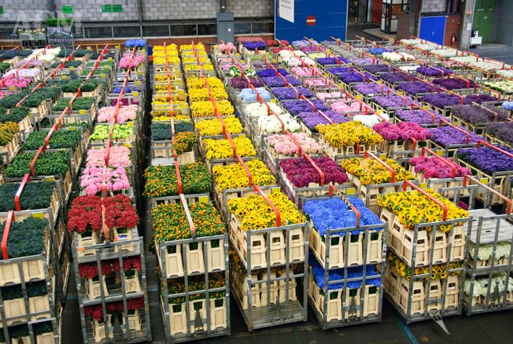 worlds-biggest-flower-market-gears-valen
