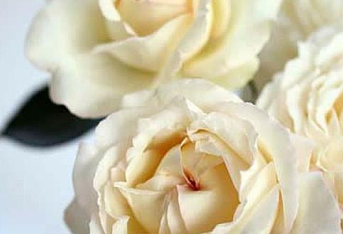 Cream-Yves-Piaget-003.jpg