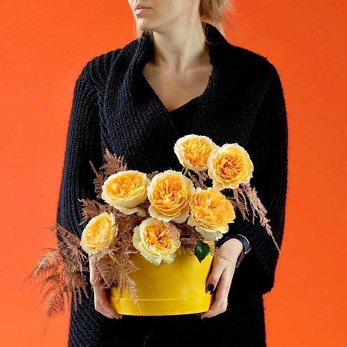Cutie cu trandafiri - David Austin  Beatrice