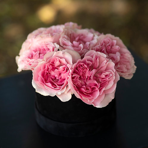Cutie trandafiri - Miranda - David Austin