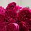 Thumbnail: David Austin Wedding Rose Darcey™