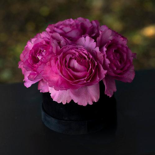 Cutie trandafiri - Yves Piaget - Meilland