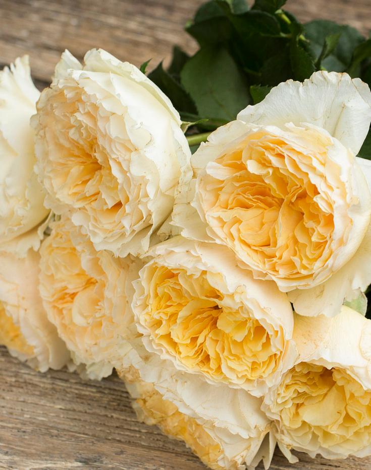 Beatrice-David-Austin-Wedding-Rose-001.p