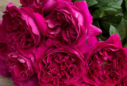 Darcey-David-Austin-Wedding-Rose-001.png