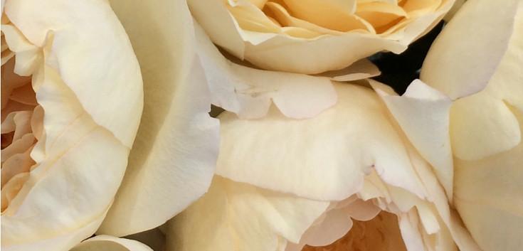Cream-Yves-Piaget-001 (1).jpg