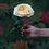 Thumbnail: David Austin Wedding Rose Effie™