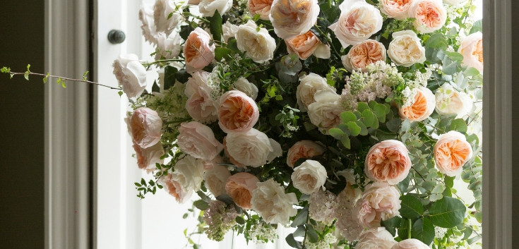 purity-and-juliet-roses-by-david-austin-