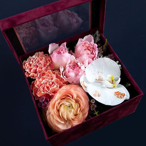 Cutie trandafiri - Princesse Charlene - Meilland