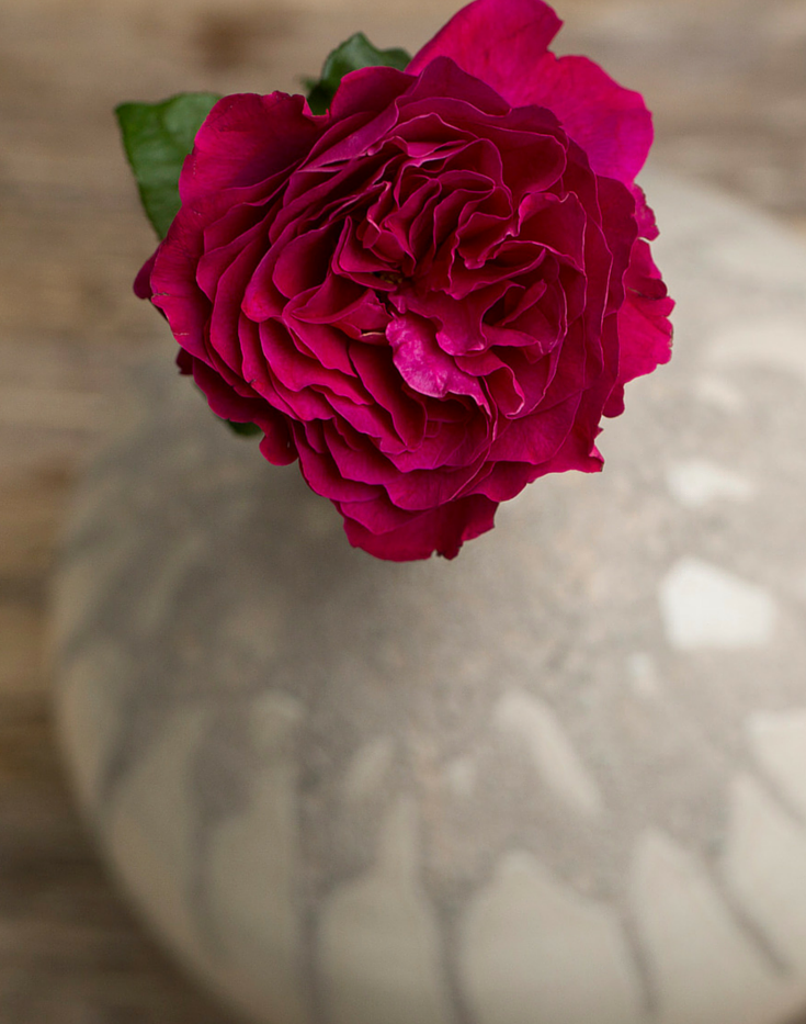 Darcey-David-Austin-Wedding-Rose-005.png
