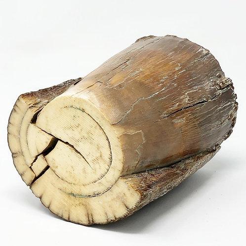 Pedazo de Marfil de Mamut