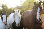 HORSES PROFILE.jpg