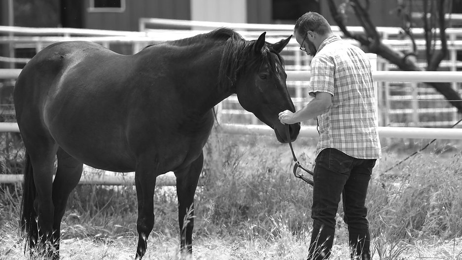 Individual equine assisted psychotherapy session.