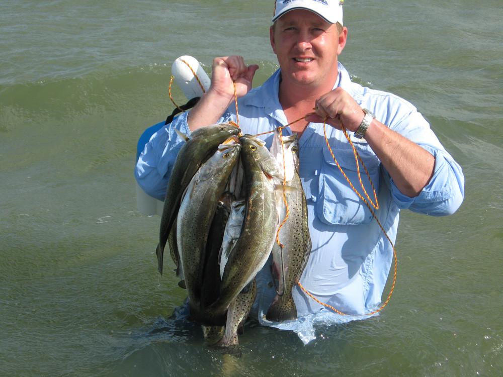Big stringer of speckled trout