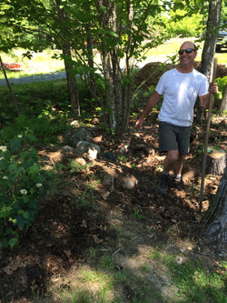 Planting in Woodland Hollow