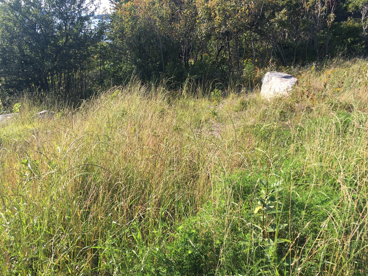 Later in summer, native grasses take hold.