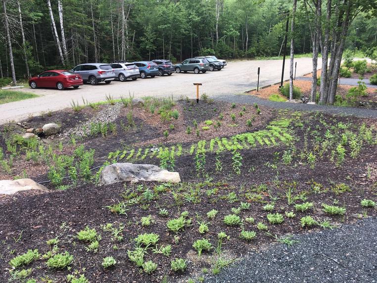 Newly planted slope
