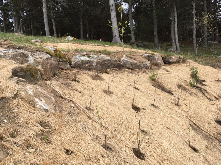 The eroding area was cut back and boulders were used to retain areas above while live stakes and seed were used below.