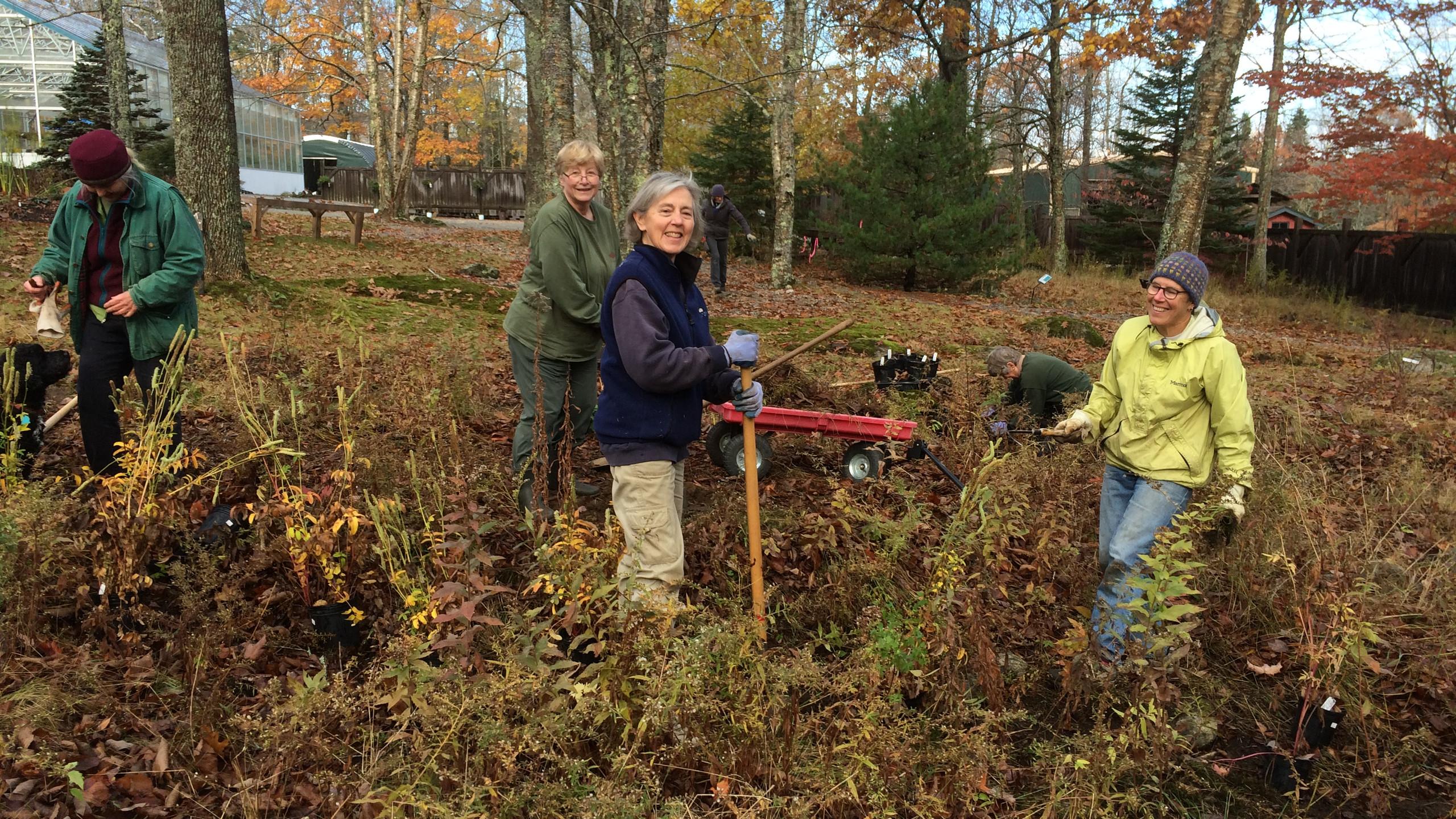 Volunteers put in 65 plants