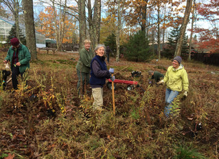 Planting At Our Mainescape Garden Site