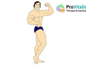 Bizeps wie Arnold Schwarzenegger