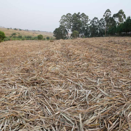 Campaigners lose court case to stop Ugandan forest clearance