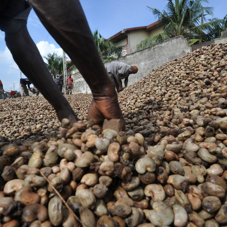 Tanzania arrests 92 officials for cashew nut fraud
