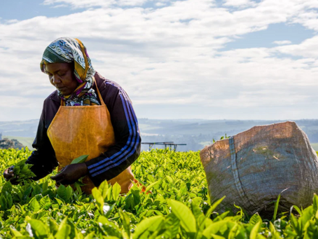 Storm in a tea plantation: UK should pay for forcing Kenyan tribes off their land, says UN