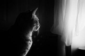 01 - cat-659426_1280.jpg
