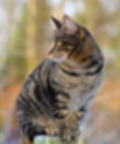 cat-1940487_1920.jpg