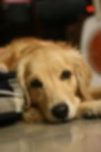 01 - dog-679003_1280.jpg