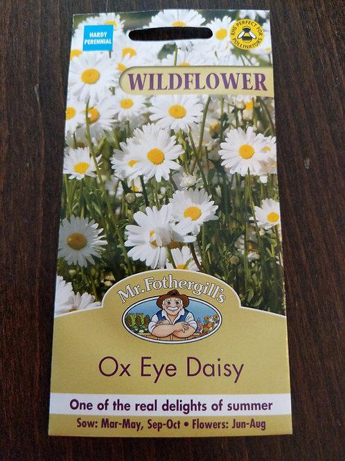 Wildflower Ox Eye Daisy