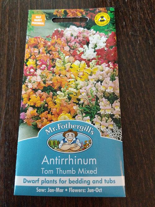 Antirrhinum Tim Thumb Mixed