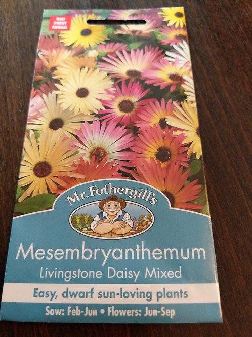 Mesembryanthemum Livingston daisy Mixed