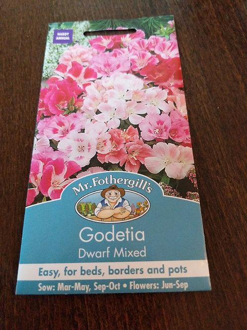 Godetia dwarf mixed
