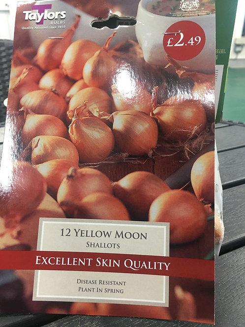 Yellow moon Shallots
