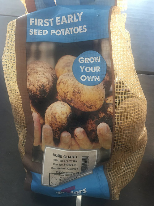 Seed potatoes Home guard