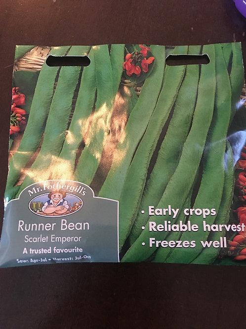 Runner bean scarlet emperor