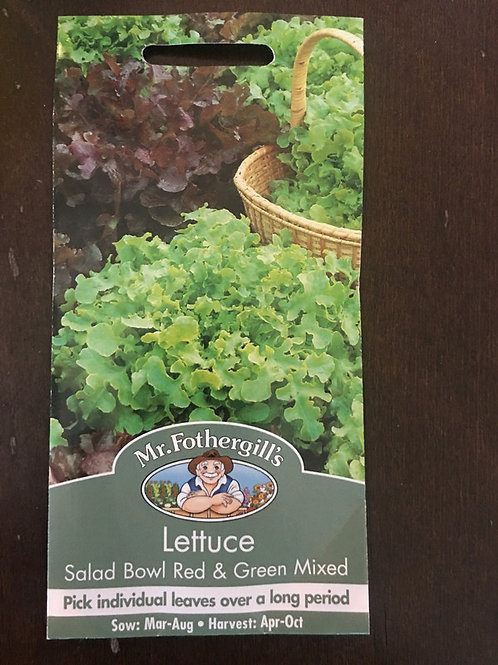 Lettuce salad bowl red and green mixed